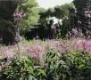 roze-kruidplanten-amstelpark-1700p
